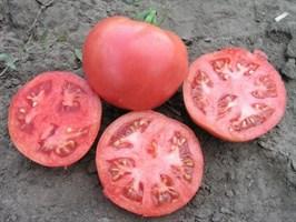 Розализа F1, семена томата детерминантный (Seminis / Семинис)
