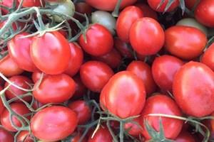 6ПУНТО7, семена томата детерминантный (Seminis / Семинис)