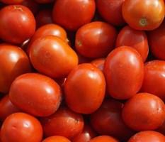 Ферст F1, семена томата детерминантный (Seminis / Семинис)