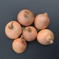 Орланда F1, семена лука репчатого (Bejo / Бейо)