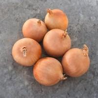 Седона F1, семена лука репчатого (Bejo / Бейо)