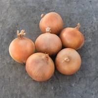 Брэкстон F1, семена лука репчатого (Bejo / Бейо)