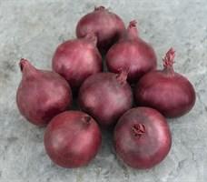 Ред Барон, семена лука репчатого (Bejo / Бейо)