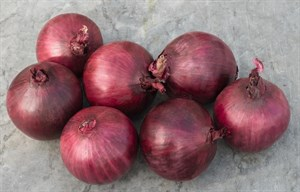 Робин, семена лука репчатого (Bejo / Бейо)