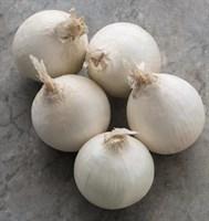 Стардаст, семена лука репчатого (Bejo / Бейо)