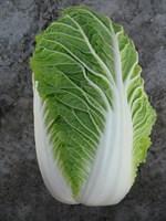 Пасифико F1, семена капусты пекинской (Bejo / Бейо)