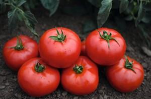 Тонопа F1, семена томата детерминантный (Bejo / Бейо)