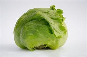 Таймс, семена салата айсберг (Bejo / Бейо)