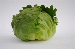 Руморс, семена салата айсберг (Bejo / Бейо)