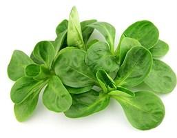 Корн, семена салата полевого (Wing Seeds / Винг Сидс)