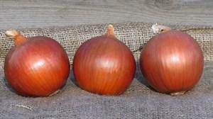 Сонома F1, семена лука репчатого (Bejo / Бейо)