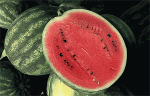 Соренто F1, семена арбуза (Syngenta / Сингента)