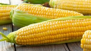 ГСС 3071 F1, семена кукурузы (Syngenta / Сингента)