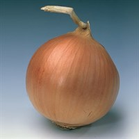 Банко, семена лука репчатого (Syngenta / Сингента)