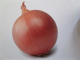 Визион F1, семена лука репчатого (Syngenta / Сингента)