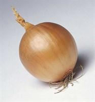 Темптэйшен F1, семена лука репчатого (Syngenta / Сингента)