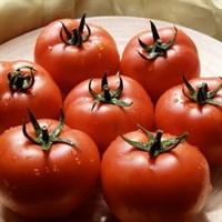 Квалитет F1, семена томата полудетерминантный (Syngenta / Сингента)