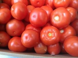 Раиса F1, семена томата индетерминантный (Syngenta / Сингента)