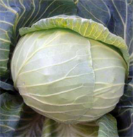 Грандслам F1, семена капусты белокочанной (Sakata / Саката)