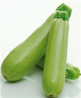 Каспий F1, семена кабачка (Sakata / Саката)