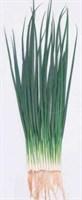 Катана F1, семена лука на перо (Sakata / Саката)
