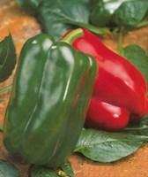Аркано F1, семена перца сладкого (Sakata / Саката)
