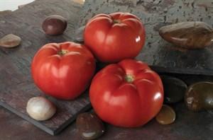Линда F1, семена томата детерминантного (Sakata / Саката)