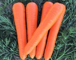 ВАК-70 F1, семена моркови курода/шантане (Vilmorin / Вильморин)