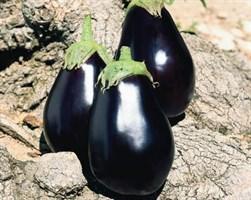 Галинэ F1, семена баклажана (Clause / Клоз)