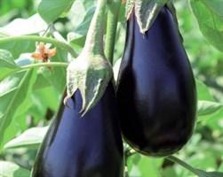Мирвал F1, семена баклажана (Vilmorin / Вильморин)