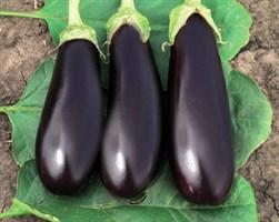 Фабина F1, семена баклажана (Tezier / Тезье)