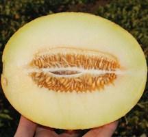 Карамель F1, семена дыни (Clause / Клоз)