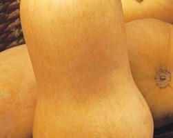 Сибель, семена тыквы (Clause / Клоз)