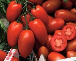 Сэр Элиан F1, семена томата индетерминантного (Vilmorin / Вильморин)