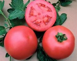 Алези F1, семена томата индетерминантного (Vilmorin / Вильморин)