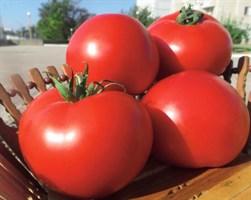 Оазис F1, семена томата детерминантного (Clause / Клоз)