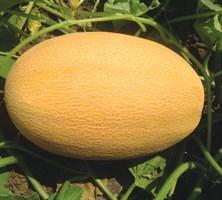 Мазиан F1, семена дыни (Clause / Клос)