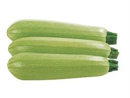 Ардендо 174 F1, семена кабачка (Enza Zaden / Энза Заден)