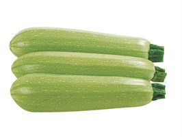 Марселла F1, семена кабачка (Enza Zaden / Энза Заден)