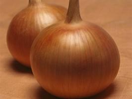 Бонус F1, семена лука репчатого (Takii Seeds / Таки Сидс)