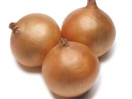 Рекс F1, семена лука репчатого (Takii Seeds / Таки Сидс)