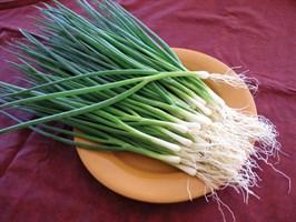 Тайкун F1, семена лука на перо (Takii Seeds/ Таки Сидс)