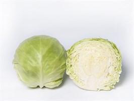 Сунта F1, семена капусты белокочанной (Takii Seeds / Таки Сидс)