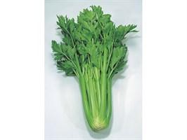 Дарклет F1, семена сельдерея (Takii Seeds / Таки Сидс)