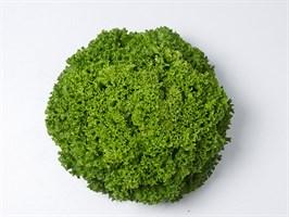 Илема, семена салата лолло бионда (Enza Zaden / Энза Заден)