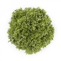 Лалик, семена салата айсберг (Rijk Zwaan / Райк Цваан)