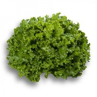 Старфайтер, семена салата батавия (Rijk Zwaan / Райк Цваан)