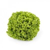 Олмети, семена салата батавия (Rijk Zwaan / Райк Цваан)