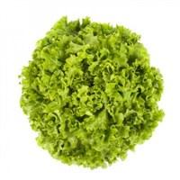 Отили, семена салата батавия (Rijk Zwaan / Райк Цваан)