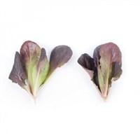 Бойд, семена салата ромэн (Rijk Zwaan / Райк Цваан)